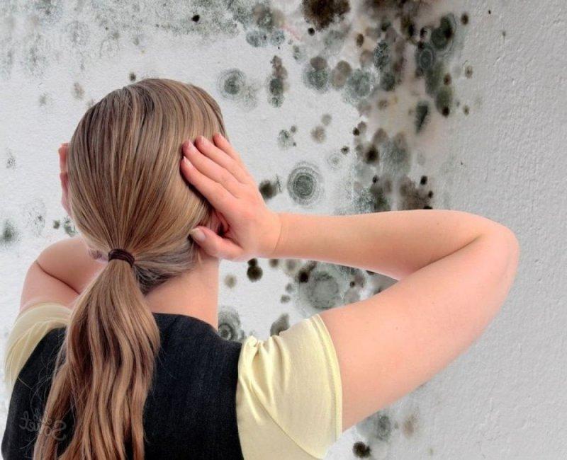 Грибок плесень на стенах как избавиться