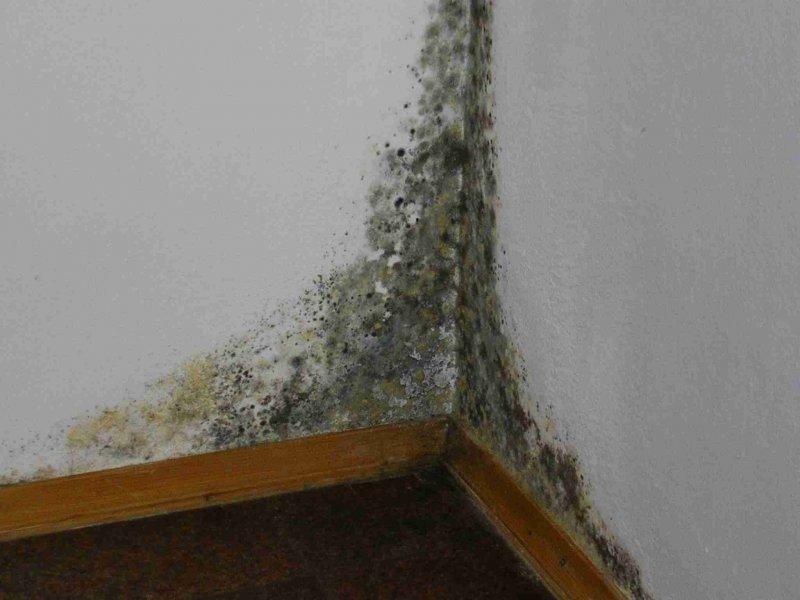 Грибок в комнате на стене что делать