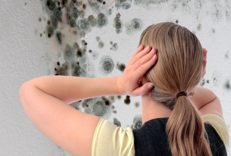 Плесень на окрашенной стене