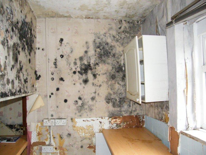 картинки, предложенные фото плесень в квартире придания